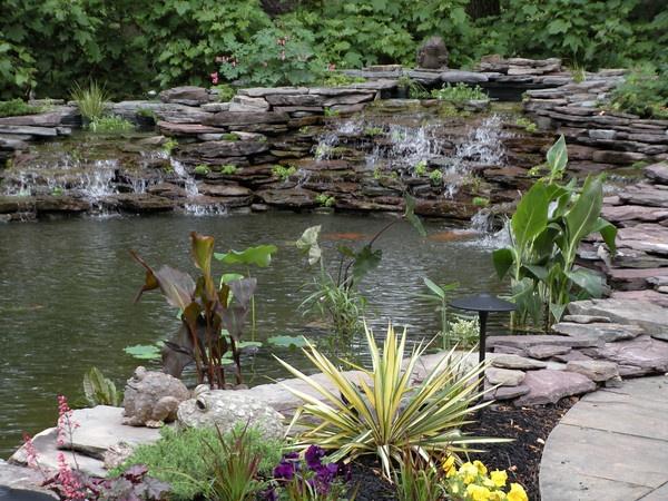 Koi Pond Backyard : Backyards