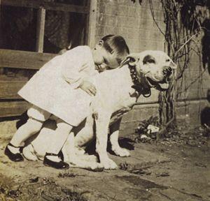 History of the pitbull dog