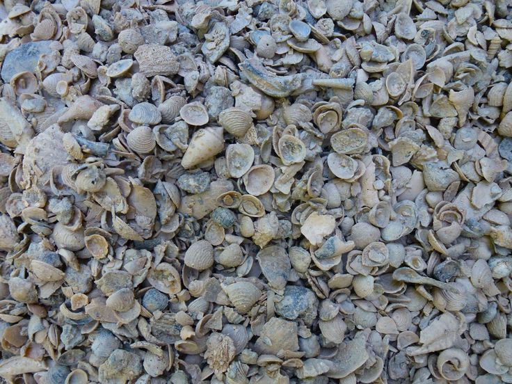 Oyster Shell Driveway Google Search Jones Residence