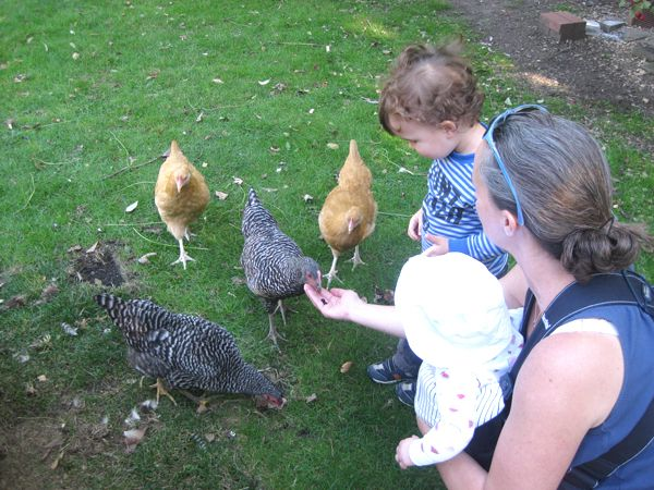 Raising Urban Backyard Chickens : Pin by Aimee Weber on Until one has loved an animal, a part of one