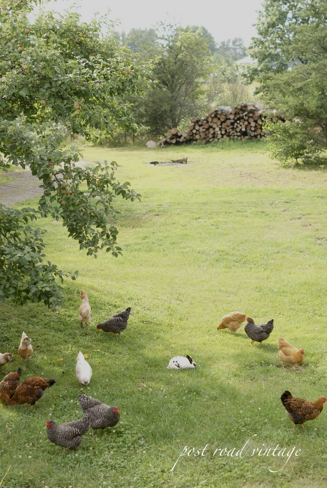 Farm life a country life pinterest for Ranch and rural living