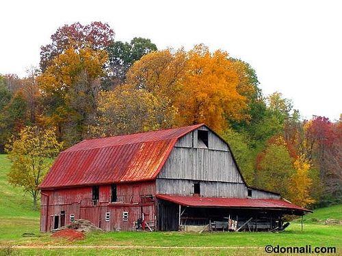 Old Gray Barn in Autumn by Donnali Fda33ed238e1f99a3ccd9a7ea90a72a5