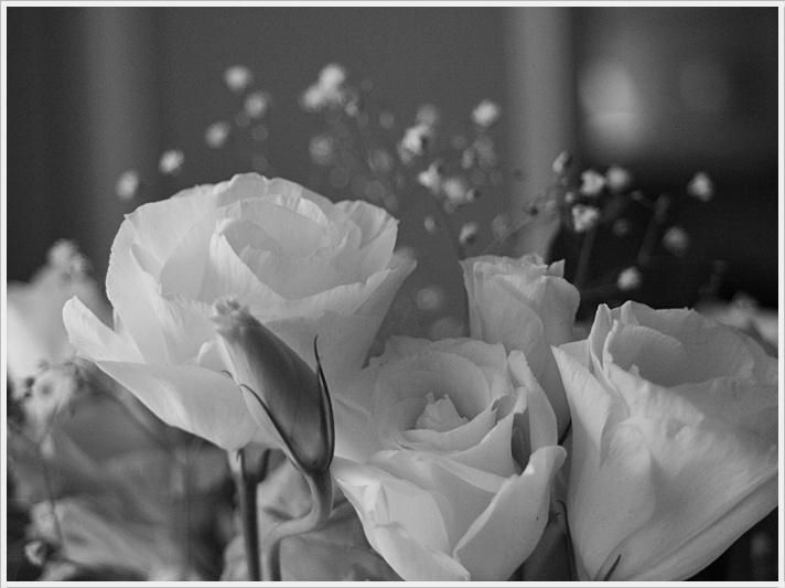 flores en blanco y negro. Black Bedroom Furniture Sets. Home Design Ideas