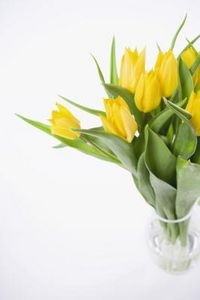 How to Grow Tulips in a Vase With Rocks & Water | eHow.com