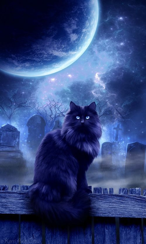 Mystic cat under the full moon
