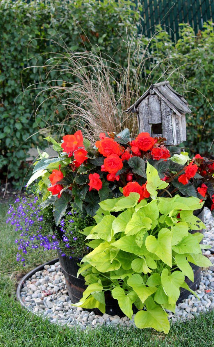 Shade pot gardening pinterest - Container gardens for shade ...