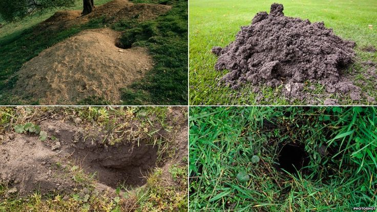 How to identify burrowing mammal holes
