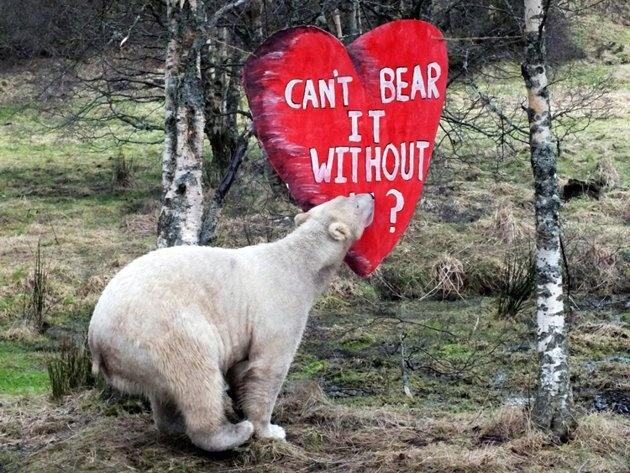 valentines park wildlife