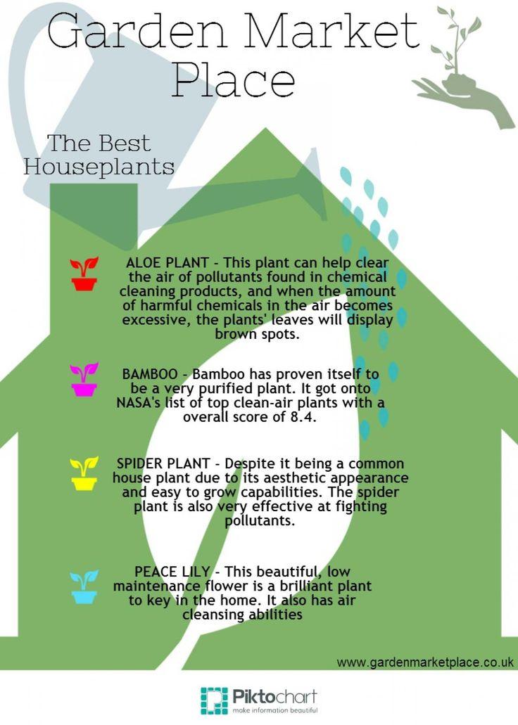 Infographic Garden Market Place | Infographics Creator
