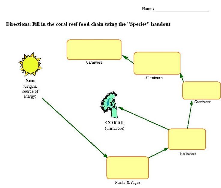 food chain worksheet - Google Search