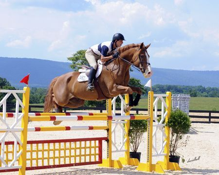 Chestnut horse with blaze jumping