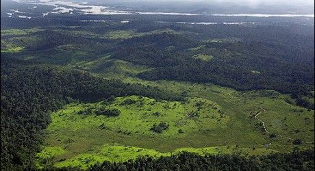 Scientists fear billions of tree deaths caused by a 2010 drought in the Amazon region of South America could see the vast forest turn from a carbon sink to a carbon source.  Billions of trees died in the record drought that struck the Amazon in 2010, raising fears that the vast forest is on the verge of a tipping point, where it will stop absorbing greenhouse gas emissions and instead increase them.  The dense forests of the Amazon soak up more than one-quarter of the world's atmospheric carbon.