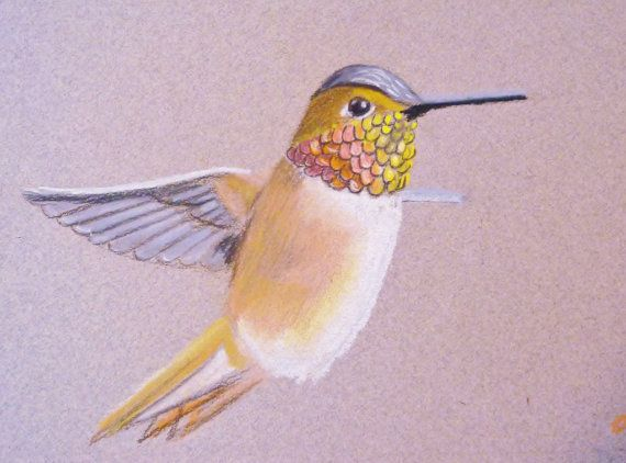 Rufous hummingbird drawing - photo#24