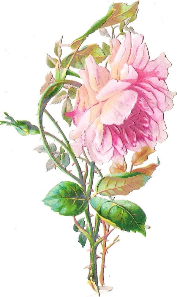 Oblaten Glanzbild scrap die cut  chromo  Rose 15,5 cm  Blume flower