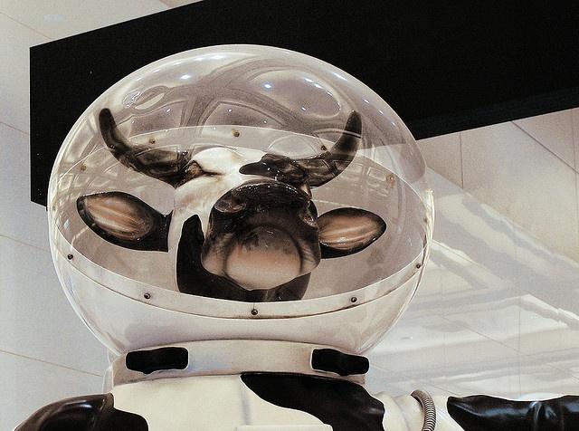 cow astronaut - photo #8