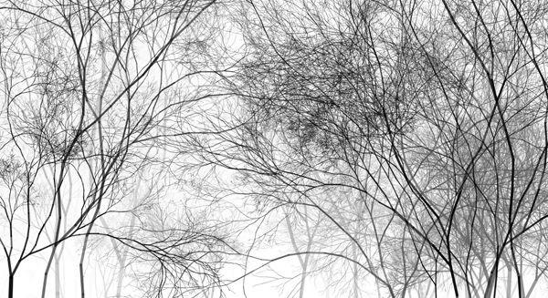 Recursion: E-Paintings by Holger Lippmann