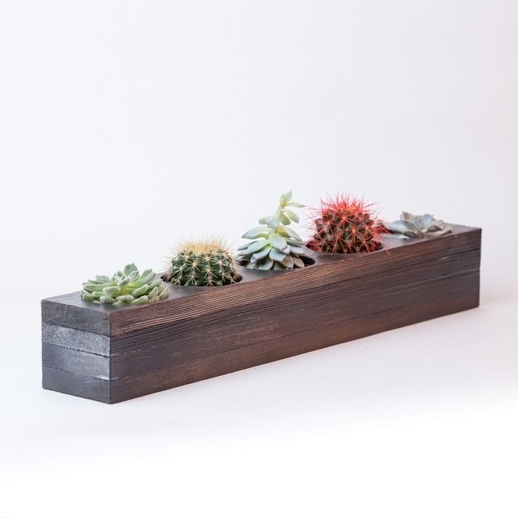 Горшки кактусов