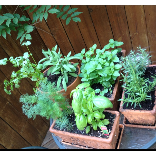 ... , Rosemary, Orange Mint, Sage, Lavender, and Dill! What am I missing