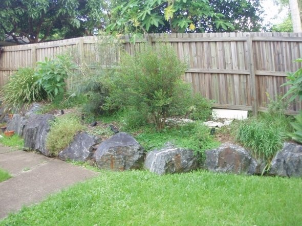 Food Forest Backyard : From Lawn To Food Forest  Yard Ideas  Pinterest