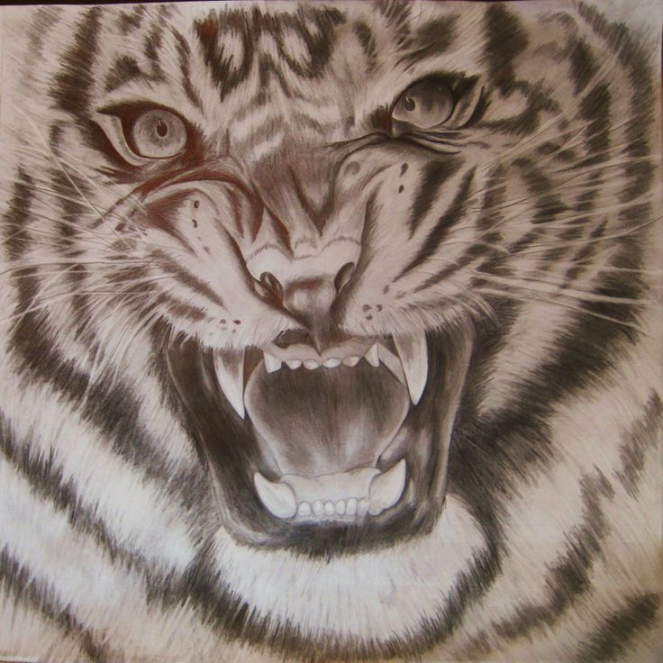 angry tiger eyes drawing harley davidson logo paint stencils Harley-Davidson Logo Outline