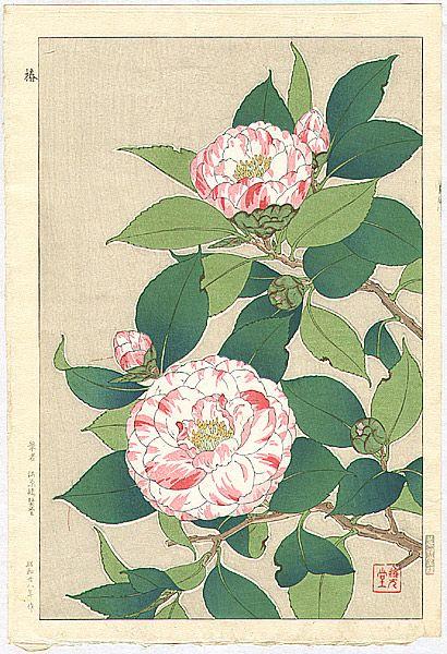 Camellia by Shodo Kawarazaki 1889 - 1973
