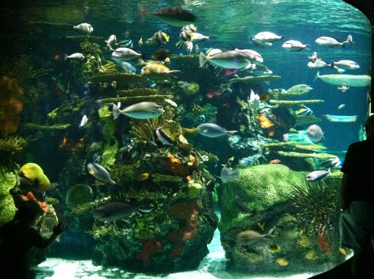 Ripley 39 S Aquarium Myrtle Beach Sc Tanked Pinterest