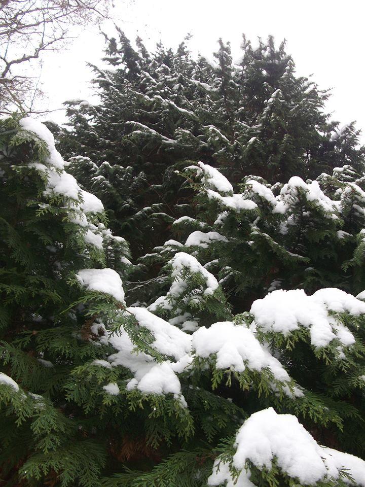 Snow in Washington State