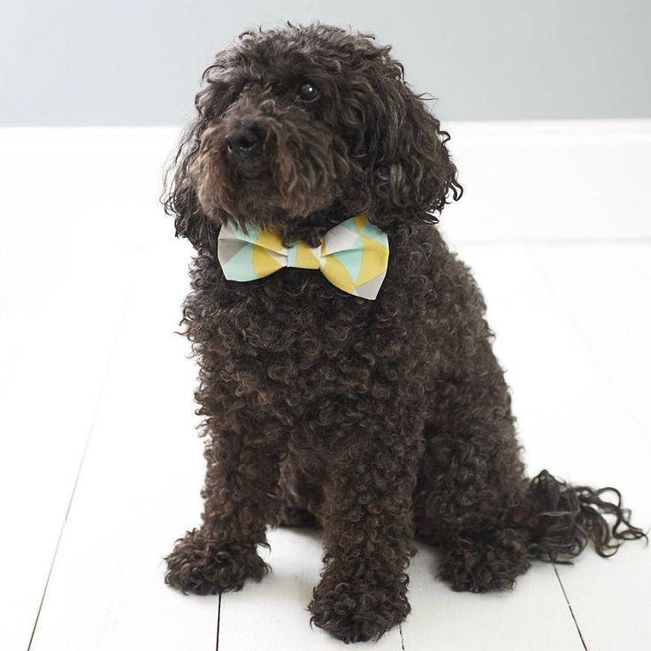 Pastel Point Dog Bow Tie