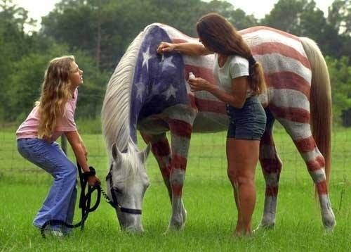 4th of july horse photos