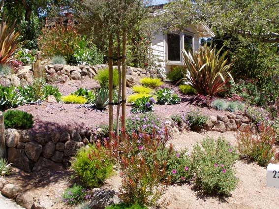 Drought tolerant landscaping gardening pinterest for Drought resistant landscaping
