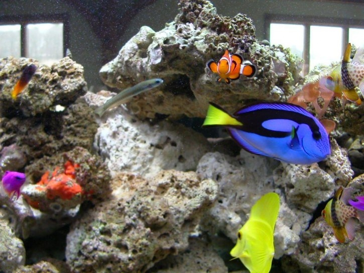 Nemo dory and bubbles disney in real life pinterest for Bubbles fish finding nemo