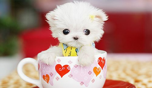 Pup in a mug