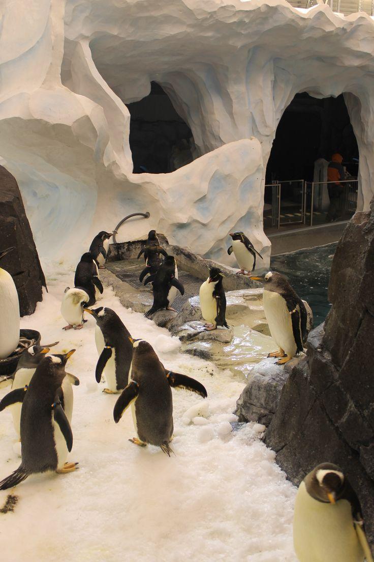 Antarctica - Empire of the Penguin