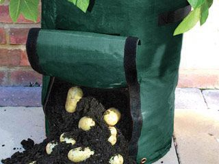 "Potato Planter    Reusable planter for growing potatoes. Ideal for patios, balconies and small gardens. Easy to move around with handles on each side. Velcro flap - no digging required!    35cm x 50cm (14"" x 20"")"