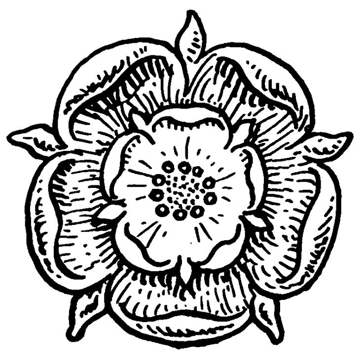 how to draw a tudor rose