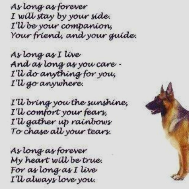Rescue Dog Poems And Quotes on The Bill Of Rights Worksheet