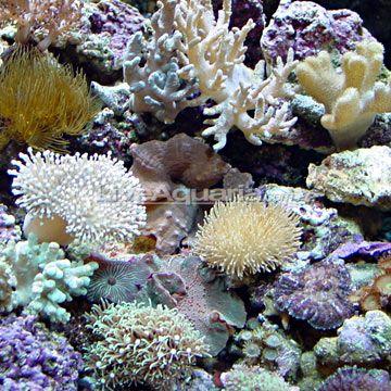Nano Soft Coral Pack Aqua pets Pinterest