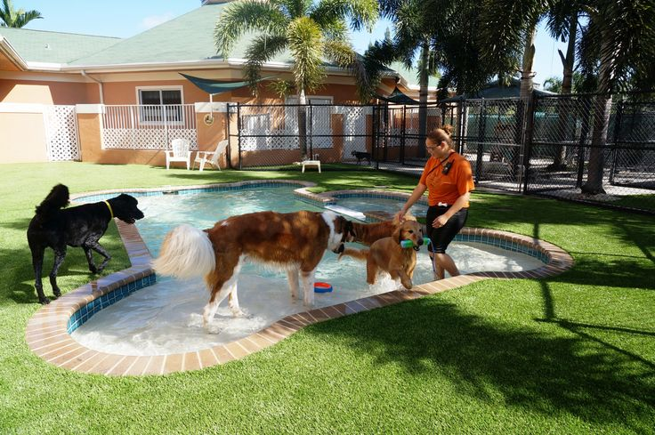 Dog Play Area In Backyard :  outdoor living l fake grass l backyard l puppy l dog play area
