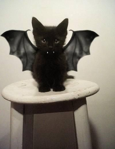 Totally gonna torture my black cat lol its friggin so cute!