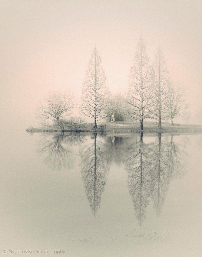 landscapes trees fog - photo #23