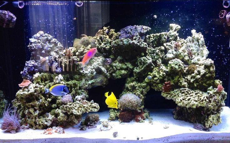 Pin By Seb Barresi On Inspiration Aquariums Vivariums And Paludariu