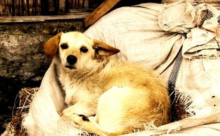 Old Stray Dog Wins the Lottery