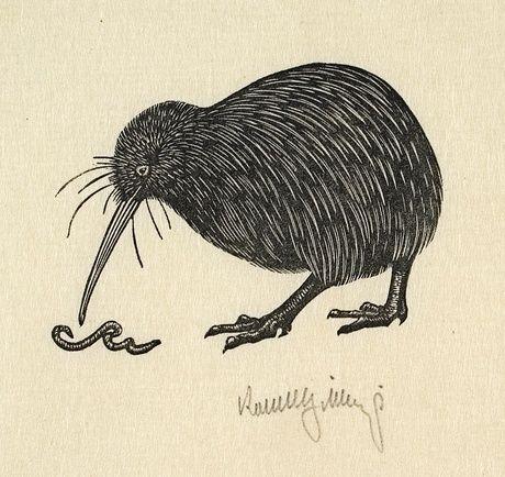 Robert Gibbings: Kiwi with worm, c.1947
