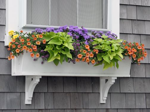 I'm kind of digging the plants in a window box idea right now...
