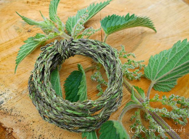how to kill stinging nettle