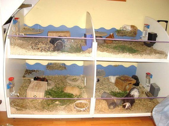 Pin by zoriah pearson on guinea pig pinterest for How to make a guinea pig bed