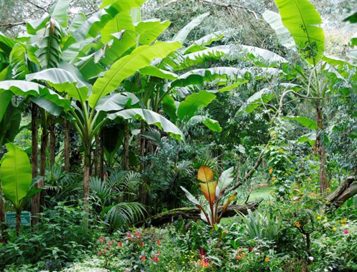 Jardin tropical el tigre pinterest for Jardin tropical