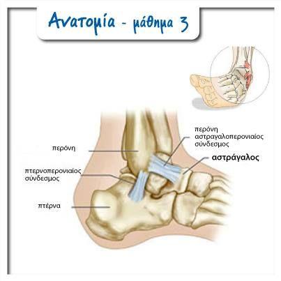 Anatomy of heel