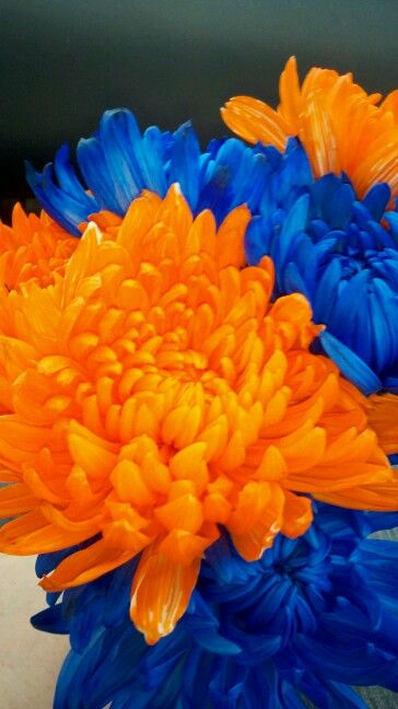 Blue & orange flowers | Orange You Blue | Pinterest