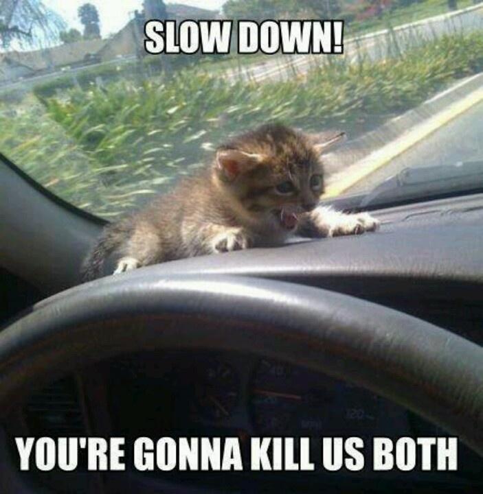 Slow Down (Ha Ha)